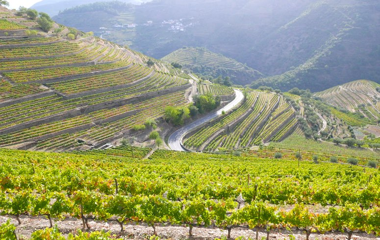 quinta do noval - Douro Valley Landscape