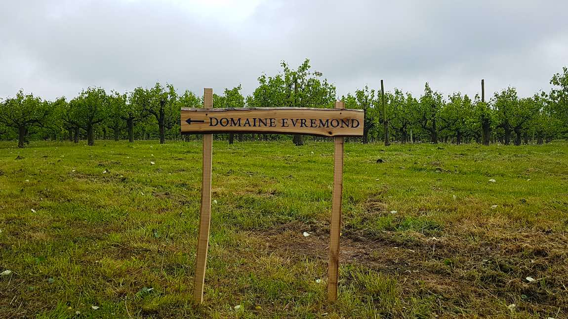 Planting Champagne Taittinger at Domain Evremond Kent